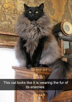 Wearing the fur of his enemies