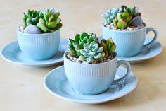 Decore a cozinha com suculentas em xícaras!   Vídeos e Receitas de Sobremesas