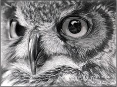 1000+ ideas about Simple Owl Drawing on Pinterest | How To Draw ...