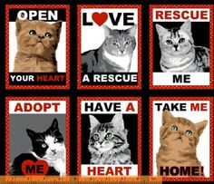 Rescue cat scrub tops