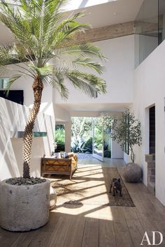 indoor palm tree concrete planter~Decorating w/ plants