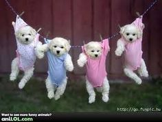hey honey, don't forget our laundry!! i mean our dogs :)