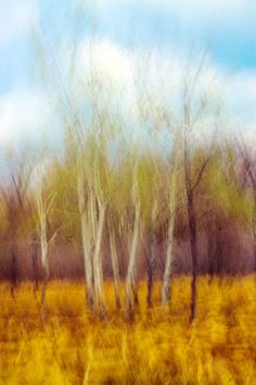 'Prairie Impression' by MLabuda Impressionism, Natural Beauty, Beautiful Pictures, Artsy, Preserve, Nature, Artwork, Homeschool, Photograph