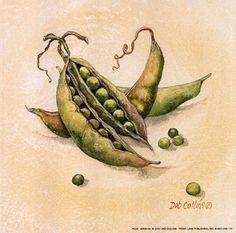 Peas by Deb Collins Plant Illustration, Kitchen Wall Art, Food Art, Painted Rocks, Decoupage, Art Projects, Fine Art Prints, Watercolor, Pea Pods