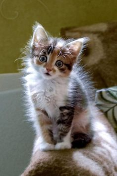 Adorable cute little kitty staring with big eyes... to see more click on pic