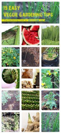 19 Easy Vegetable Gardening Tips -