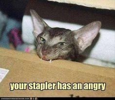 just too funny http://sulia.com/my_thoughts/cf5da3d6-e1a5-4b10-a254-4544d14d79b9/?pinner=119686333