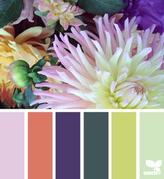 flora color by Design Seeds Colour Pallette, Colour Schemes, Color Combos, Color Patterns, Color Harmony, Color Balance, Color Blending, Color Mixing, Beautiful Color Combinations