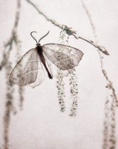 buterfly sutil delicate nature photo