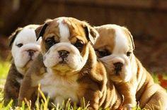 Babies!!