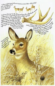 by Marjolein Bastin Nature Sketch, Nature Drawing, Illustrations, Illustration Art, Marjolein Bastin, Nature Artists, Oh Deer, Dutch Artists, Nature Paintings