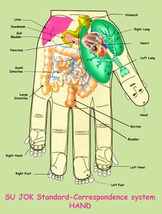 Hand health - Su-Jok therapy is a method of curing diseases by stimulation of the hands using acupuncture, finger pressure and Ayurvedic medicine. Acupressure Treatment, Acupressure Points, Reflexology Points, Alternative Therapies, Alternative Health, Point Acupuncture, Reflexology Massage, Abdominal Pain, Massage Therapy