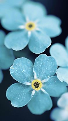 Beautiful blue flowers - iPhone wallpaper @mobile9 | #floral #macro #photography