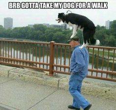 Take My Dog For A Walk