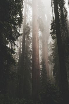 I am most alive among the tall trees.