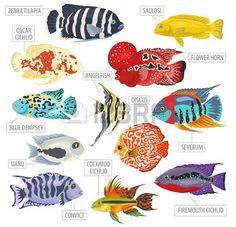 Image result for cichlid reef style aquarium