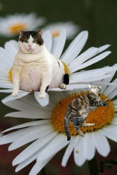 #Cats on dayses  Like,Repin,Share, Thanks!