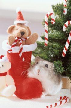 Hamster Beside Teddy Bear Stock Photo 3004-002134