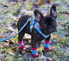 10 Best Dog Boots Images In 2020