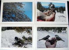 25% Off SALE Please note:  The watermark will not appear on any product you purchase. This CHICKADEE-themed 4-piece set of blank #Photo Greeting #Cards features these delight... #photogifts #cards #photo #dailyetsysales #pamsfabphotos #epsteam