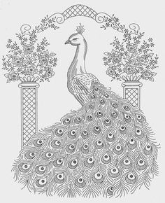 Advanced Peacock Coloring Pages from Animal Coloring Pages category. Printable coloring pictures for kids that you could print out and color. Have a look at our selection and printing the coloring pictures for free. Peacock Coloring Pages, Coloring Pages To Print, Coloring Book Pages, Printable Coloring Pages, Coloring Pages For Kids, Coloring Sheets, Peacock Drawing, Peacock Art, Peacock Pattern