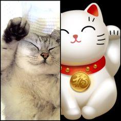 Lucky Cat. #imgur