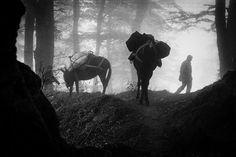http://bartoszmatenko.com/index.php/report/-albanian-shepherds/