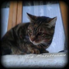 Ecco qui la Piccola #EtaBeta che in tutta la sua felina bellezza augura a tutti la #BuonaNotte e un #buonweekend :-)    Anche da parte mia ovviamente :D      #Goodnight #Sleeptime #sleep #weekend #happyweekend  #catsofinstagram #cats #instacat #cutecats #sweetcats #lovelovelove #lovecat   @animals_captures #animal_captures #cats #pets #animals #photooftheday #ilovemycat #nature #catoftheday #lovecats   #catsmylove #gatti #ioamoglianimali #MIAO :-)