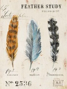 Nature's Feathers by Angela Ataehling                                                                                                                                                                                 More
