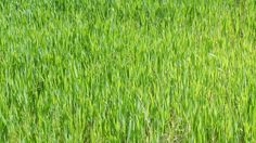 Mountain Long Green Grass In Wind Landscape Of A Swinging Grass Green Grass, Green Leaves, Meadow Garden, Shops, Photoshop, Grass Field, Garden Types, Isabelle, Wall Patterns