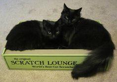 The Original Scratch Lounge  13.5 x 22 x 4.8 inches $22