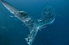 Tiburones.. Reyes del océano.