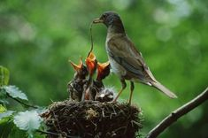 ★ Glamorous Green ★ 15 Amazing Images of Baby Birds at Dinner Time