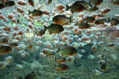 Den blå planet. Aquarium, Copenhagen   #aquarium  #fishes  #copenhagen  #stellahaugephoto