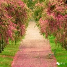洒满芬芳的幸福之路