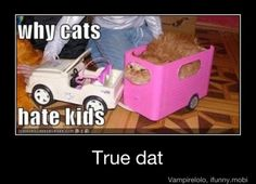 Literally did this to my cat. Horse trailer with a remote control car. She loved her drives muahhhaha.