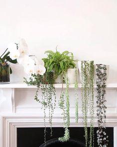Q maravillosa armonía d plantas para el interior d nuestro espacio , aquel q nos da cobijo ! , muacKiss