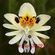 Vente! Bleu papillon Iris Semences (100 graines) Orchidées Graines de fleurs. vieillissement graines pour La Maison Jardin Bonsaï plantes d'extérieur