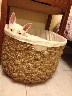 Tequila's basket bed!