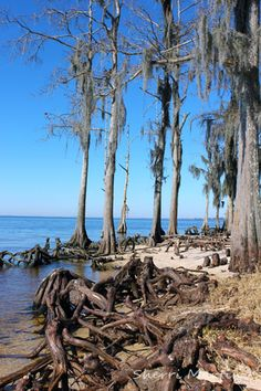 Fontainebleau State Park - Mandeville, Louisiana - Lake Pontchartrain
