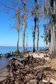 Mandeville Louisiana Photography Pinterest Louisiana