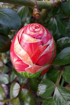 red Rosebud Rose Buds, Easter Eggs, Illustration, Feather, Christmas Ornaments, Holiday Decor, Red, Painting, Home Crafts