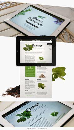 Species-plantarum-application-mobile-botanique-ipad-iphone-celine-delage_3_1240