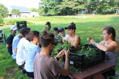 Chewonki Semester School work program processing basil on the farm.  Read more on the school blog. chewonki.org/semester