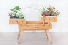 A vintage sewing box gets new life as an eye-catching planter.