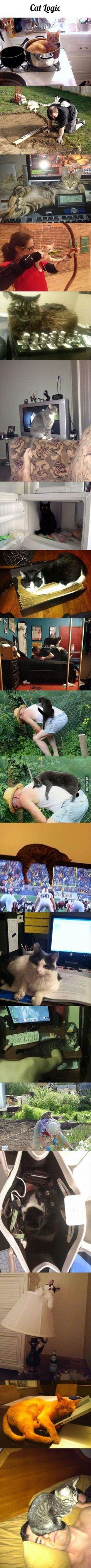 Cachou!! Sors de ce congelo! Bon sang y'a que les chats noirs qui font ça dites moi?