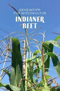 Schon die Maya pflanzten Mais, Bohnen und Kürbis in Mischkultur. Diese Gemüse Kombination im Nutzgarten oder Gemüsegarten wird Indianerbeet oder Milpa genannt. Ich erkläre dir in einem DIY Tutoriai, was Du beim Anlegen Deines Gemüsebeets beachten musst. #nutzgarten #gemüsegarten #garten