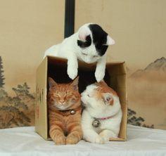 kitties in a box