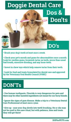 In Honor of National Pet Dental Health Month, we have put together this simple a… - Santé bucco-dentaire Dental Hygiene School, Dental Humor, Dental Health Month, Oral Health, Dog Health Tips, Pet Health, Health Care, Dog Care Tips, Pet Care