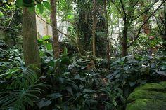 sumatran rainforest - Google 検索